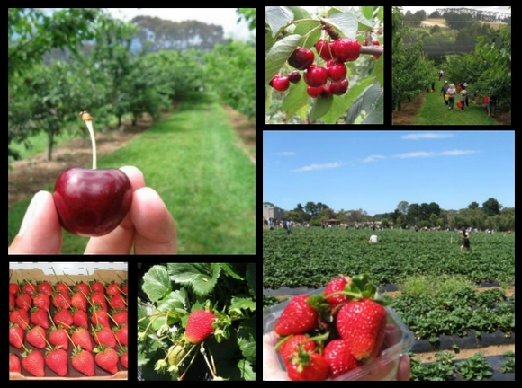 mornington strawberry cherry